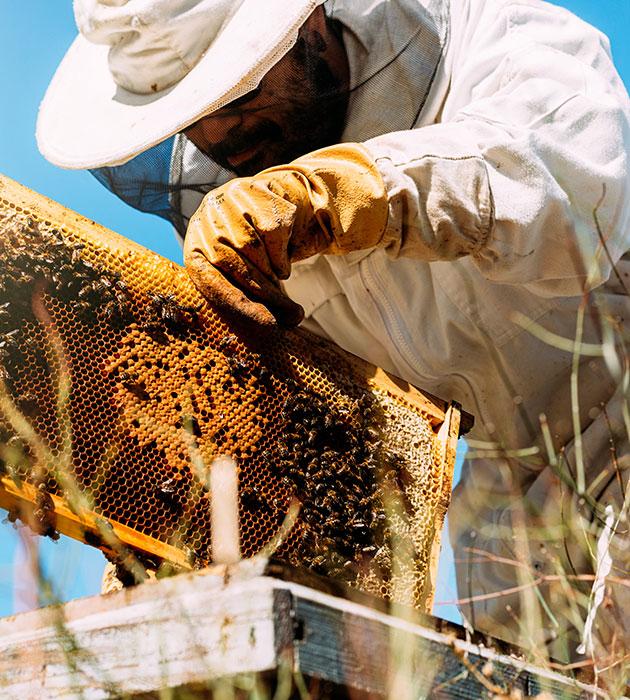 imkerjacke-imker-handschuhe-insektenstiche-schutz